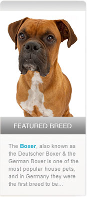 Featured Breed